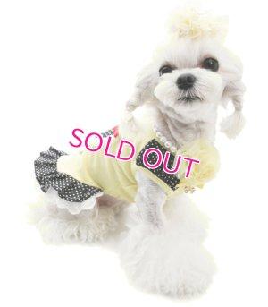画像4: 【30%OFF】【犬 服】【PUPPYANGEL】ドッティーハートドレス【メール便無料】