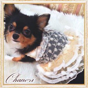 画像2: 犬 服【セール】【2480円】【新作】クリームレースフリルドレス/Petstyle