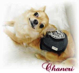 画像2: 愛犬のマナー*エンブレムマナーベルト*ラメデニム*【Chaneri Original】